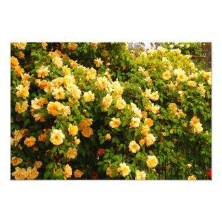 Blomsterträdgård Fototryck
