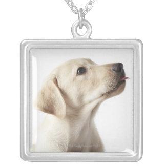 Blond Labrador valp som ut klibbar tungan Silverpläterat Halsband
