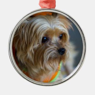 Blond Yorkshire Terrier Julgransprydnad Metall