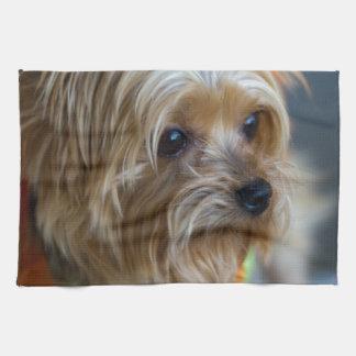 Blond Yorkshire Terrier Kökshandduk