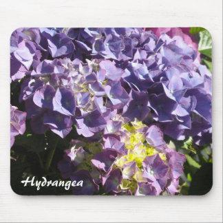 Bloomin vanlig hortensia musmatta