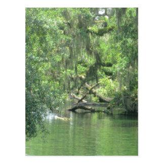 Blue Springs flod Florida Vykort