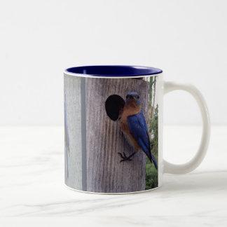 Bluebirdset boxas på muggen Två-Tonad mugg