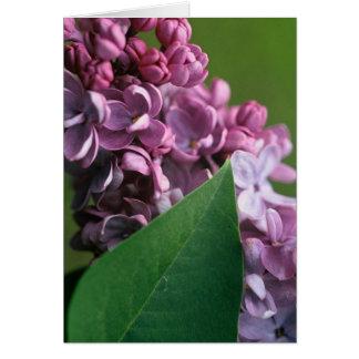 Blygt lila hälsningkort hälsningskort