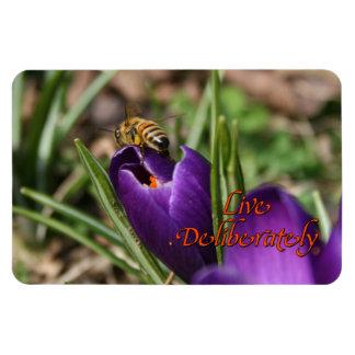 Bo avsiktligt w-/honeybiet som pollinerar krokus magnet