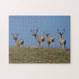 Bockar för hjort för Mule D0009 Jigsaw Puzzle
