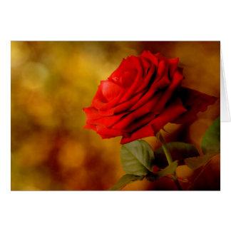 Bokeh röd roskort hälsningskort