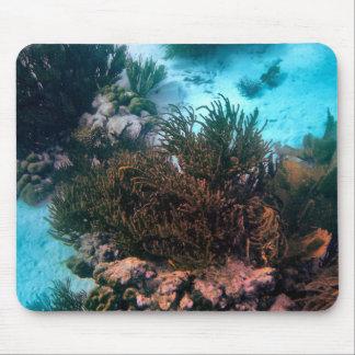 Bonairean rev musmatta