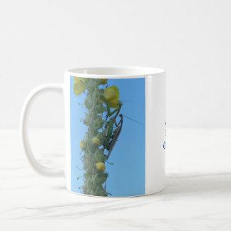 Bönsyrsor parar på den Mullein växten Kaffemugg