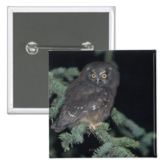Boreal uggla på gren standard kanpp fyrkantig 5.1 cm