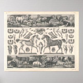 Boskaptrycket 1800's skrämmer fårhästgrisar poster