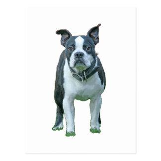 Boston terrier 1b vykort