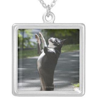 Boston Terrier 2 Silverpläterat Halsband