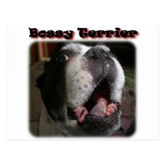 Boston Terrier:  Domdera Terrier Vykort