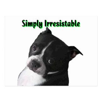 Boston Terrier:  Enkelt oemotståndligt Vykort