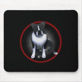 Boston Terrier:  Glöda Musmatta