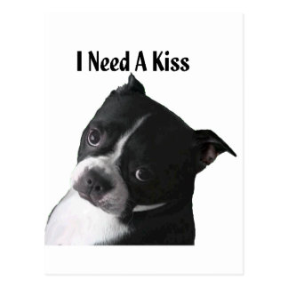 Boston Terrier:  Jag behöver en kyss Vykort
