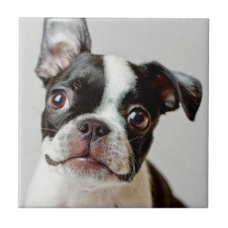 Boston Terrier Kakelplatta