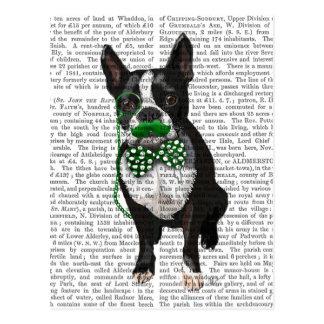 Boston Terrier med den gröna moustachen och Vykort