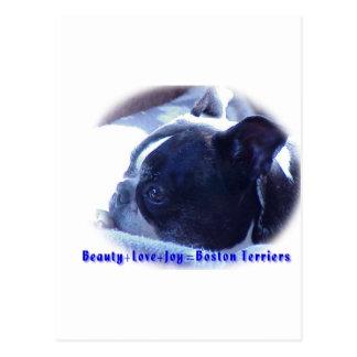 Boston Terrier:  Skönhet kärlek, glädje Vykort