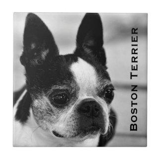 Boston Terrier som är svartvit Kakelplatta