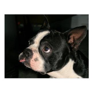 Boston Terriervykort Phhhhhtt! Vykort