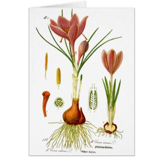 Botanikillustration Hälsningskort