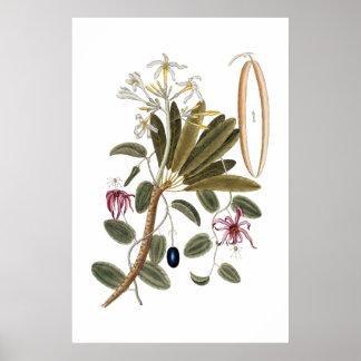 Botanisk affisch för vanilj poster