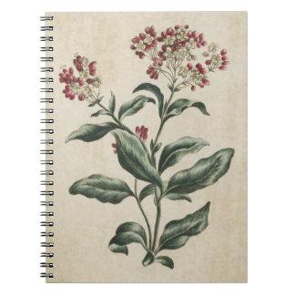 Botanisk blom- Laurestina för vintage illustration Anteckningsbok