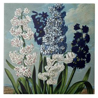 Botanisk blomhyacintkeramik kakelplatta