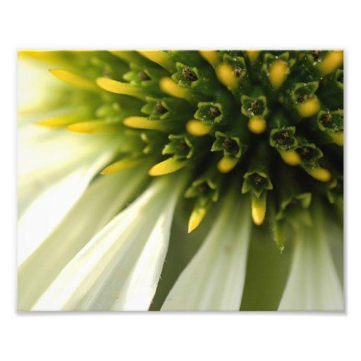 Botanisk blomma fotokonst