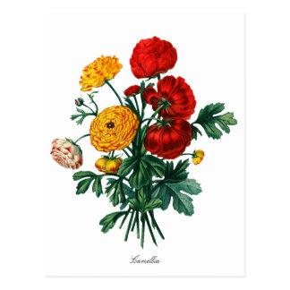 Botanisk Camellia Bokeh Vykort