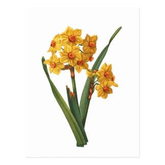 Botanisk gul påsklilja vykort