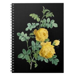 Botanisk illustration för gul rosvintage anteckningsbok