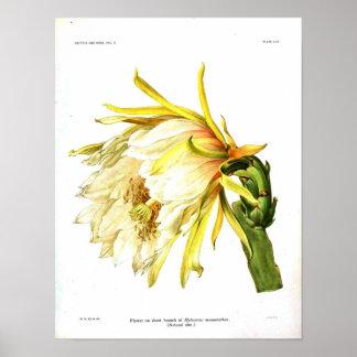 Botanisk kaktus för vintage poster