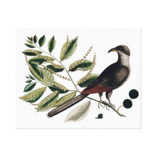 Botanisk kanfas för vintagefågel canvastryck