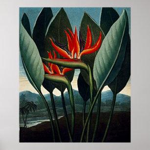 1f2e4d6573d7 Botanisk konst fågeln av paradiset poster