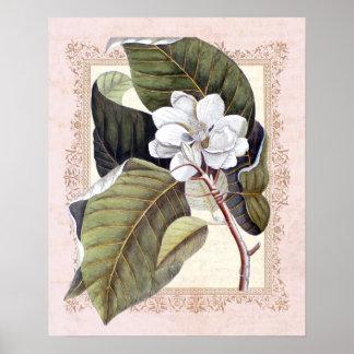 Botanisk Magnolia för sydlig elegansvintage Poster