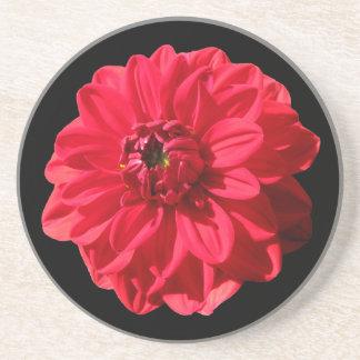 Botanisk röd Dahliablomma på någon färg Underlägg