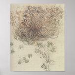 Botanisk studie för Leonardo Print