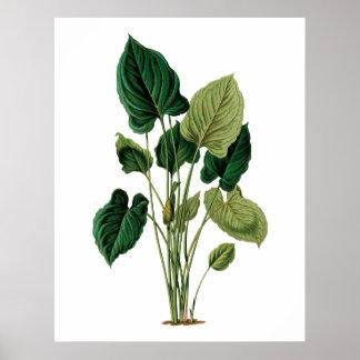 Botanisk tryckphilodendron för tropiska stora löv poster