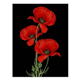 Botaniska röda vallmor för vintage vykort