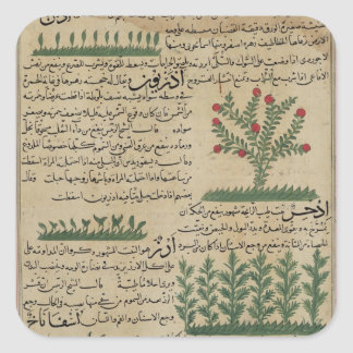 Botaniska växter, illustration från ' fyrkantigt klistermärke