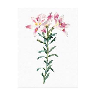 Botaniskt HÖGVÄRDIGT KVALITETS- tryck av liljar Canvastryck