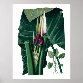 Botaniskt tryck för tropiska stora löv