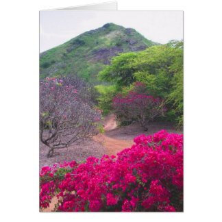 Bougainvillea & Frangipani Kort