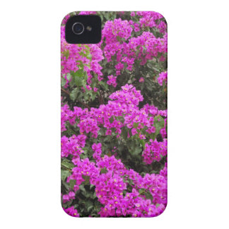 Bougainvillea iPhone 4 Case-Mate Skal