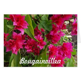 Bougainvillea Notecards OBS Kort