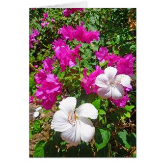 Bougainvillea och hibiskus hälsningskort