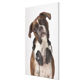 boxarehund med hörlurar canvastryck
